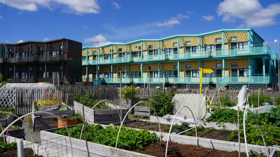 Stadsodling i Frihamnen med temporära bostäder i bakgrunden.